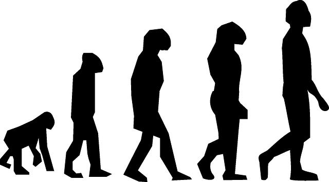 vývoj člověka.png