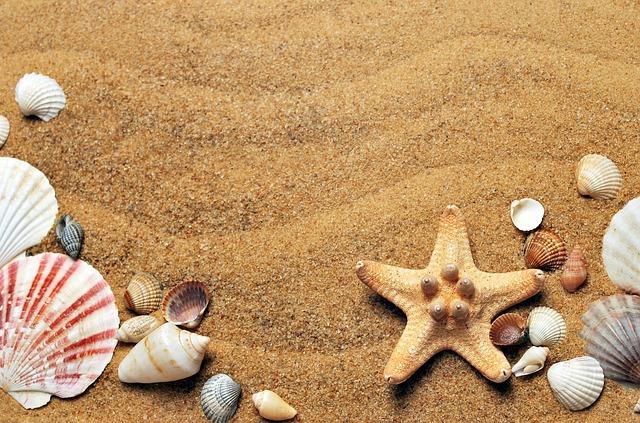 mušle na piesočnatej pláži